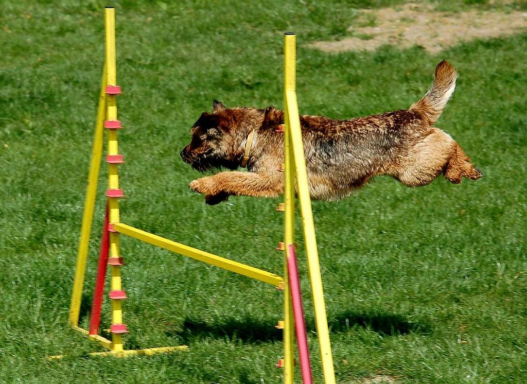 Rabbit Hunting Training For Dogs