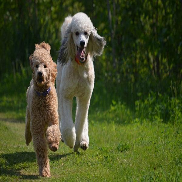 Dog Breeding