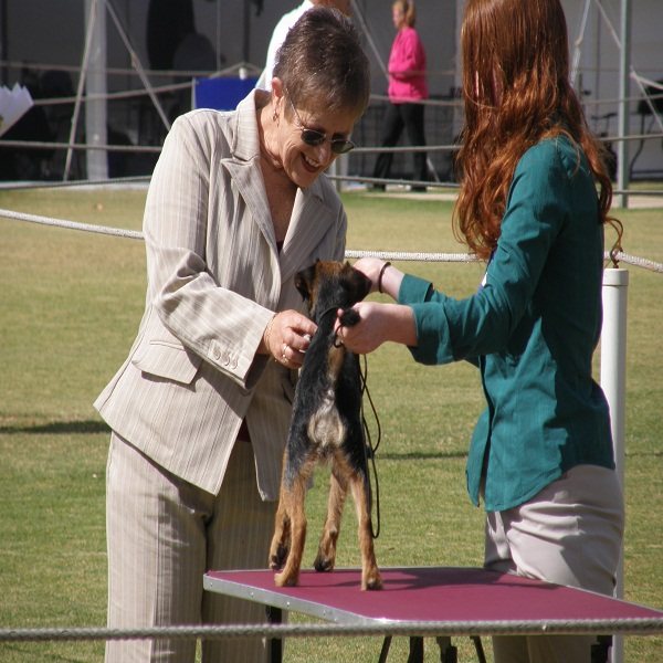 Health Checks For Dog Breeding