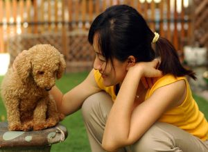 3 Best Ways To Train Your Poodle